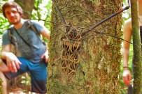 la-leona-lodge-insecto