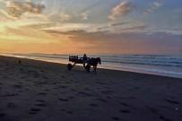 La Leona Lodge Kutsche am Strand