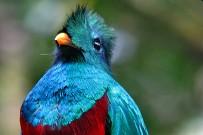 quetzal02