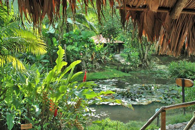 esquina_rainforest-pond