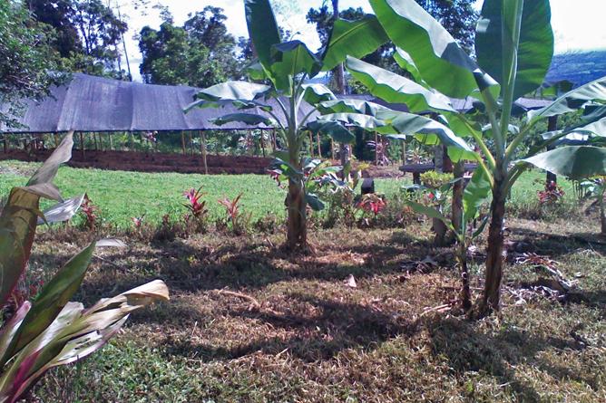 """Green Lagoon – Bananen im Bio-Garten """"El Escondido"""""""