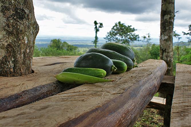 "Green Lagoon – Gurken aus dem Bio-Garten ""El Escondido"""