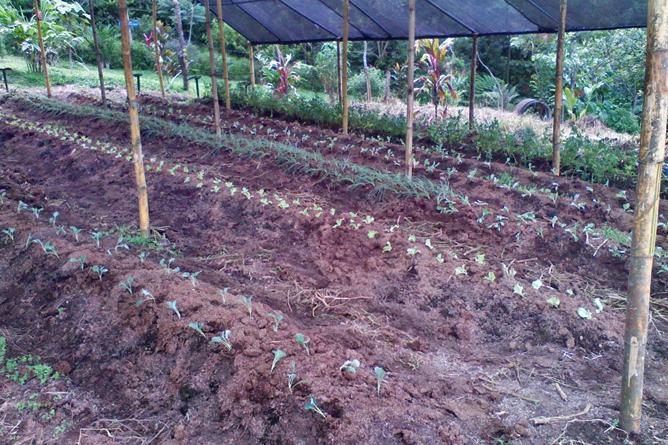 Green Lagoon – Bioanbau: Setzlinge