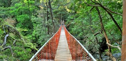 Hacienda-Guachipelin-Hängebrücke-Río-Negro