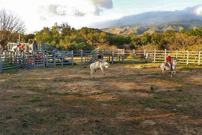 Hacienda Guachipelin – Pferdezucht