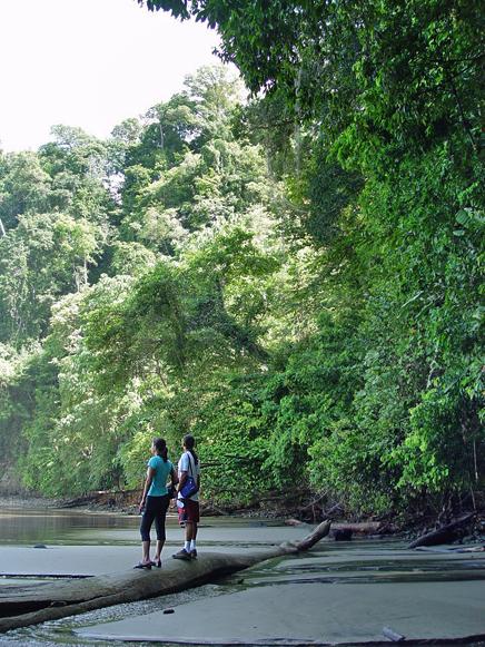 La Cusinga Ecolodge – Wald