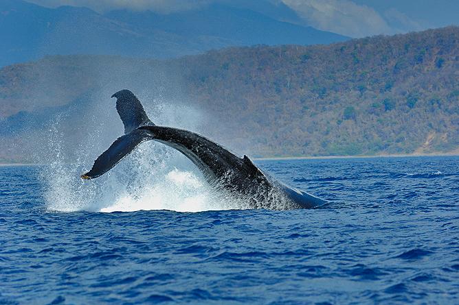 La Cusinga Ecolodge – Wal