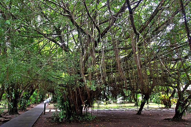 Turtle Beach Lodge – Bäume in der Gartenanlage