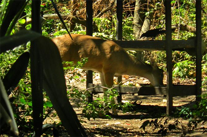 In Bio Parque Costa Rica – Reh