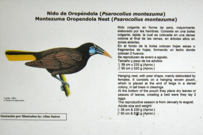 In Bio Parque Costa Rica – Montezuma-Vogel