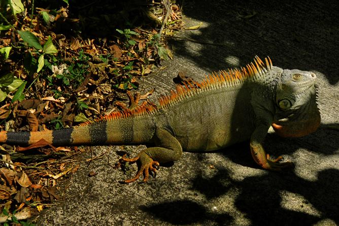 In Bio Parque Costa Rica – Fauna