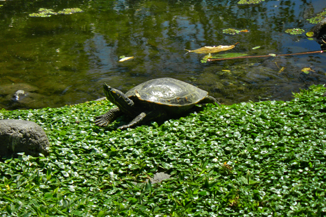 In Bio Parque Costa Rica – Schildkröte