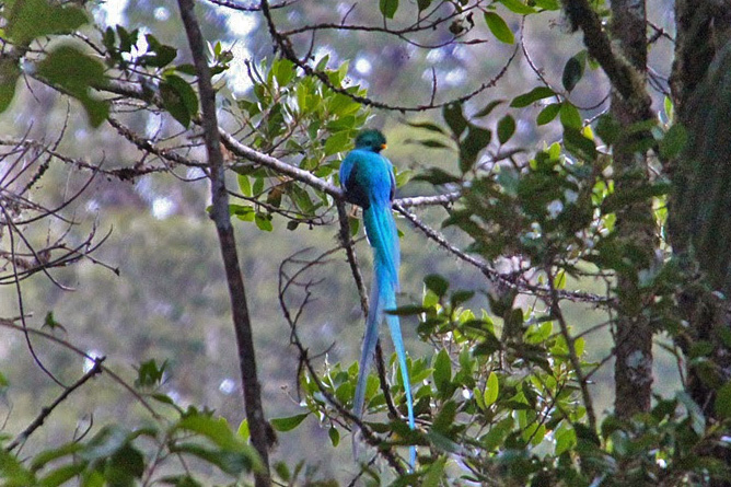 Quetzal San Gerardo de Dota Costa Rica