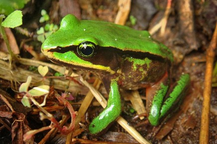 Albergue-Pozo-Verde-Natur-Lithobates-vicaria
