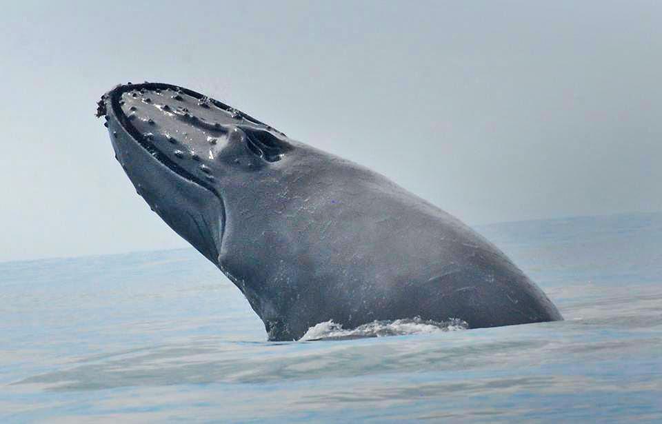 Bahia Aventuras – Walbeobachtung