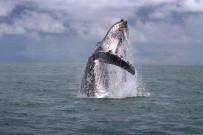 Bahia Aventuras - Walbeobachtung