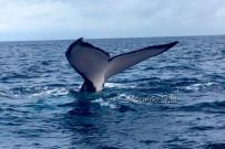 Bahia Aventuras Walflosse 4-2019