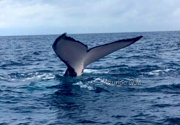 Bahia Aventuras – Walflosse
