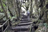 Braulio Carrillo_Trail_Vulkan Barva_Foto Christine-HJ_08-2017