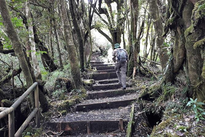 Braulio Carrillo Trail Vulkan Barva