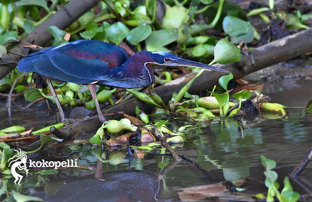 Kokopelli Bootstour Heron (Foto: Claudia Langguth)