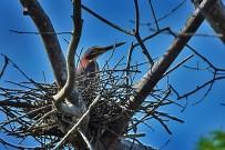 Mangroventour-Vogel
