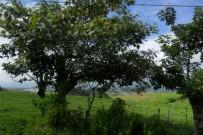 landschaft_am_irazu