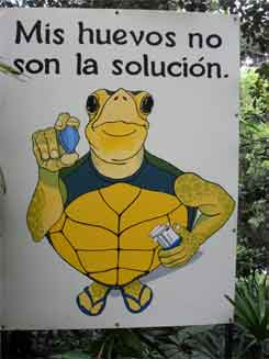 Zoo Ave – Schildkröteneier