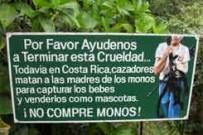 no_compre_monos