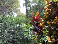 Zoo Ave – Pflanzen