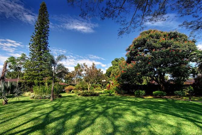 Bougainvillae – Park