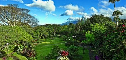 Bougainvillea-Landschaftsgarten-Panorama