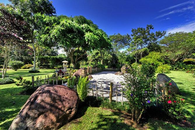 Bougainvillea – Landschaftsgarten