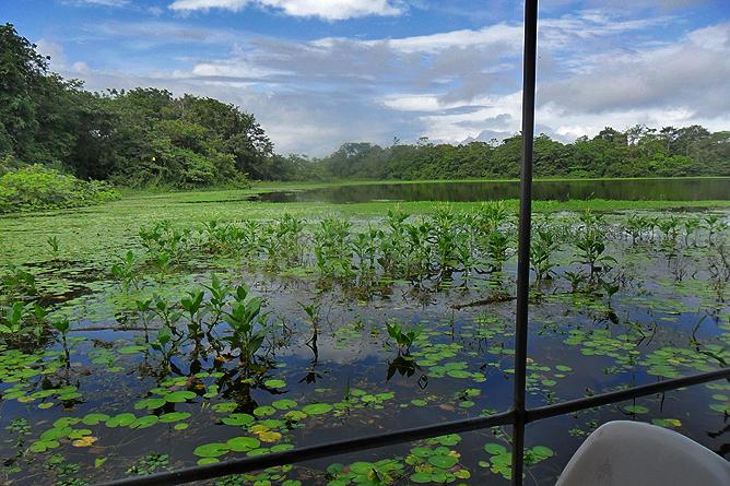 Natural Lodge Caño Negro – Flussfahrt, Wasserhyazinthen