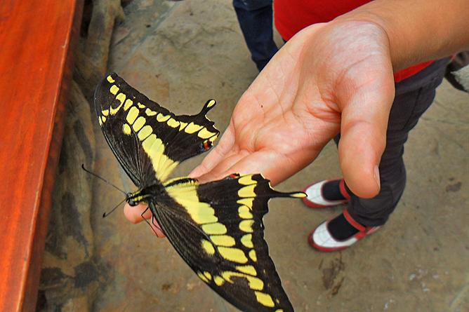 Costa Rica Familien-Rundreisen: Schmetterling im Wasserfallpark
