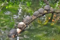 Familien-Rundreise-Fluss-Schildkröten