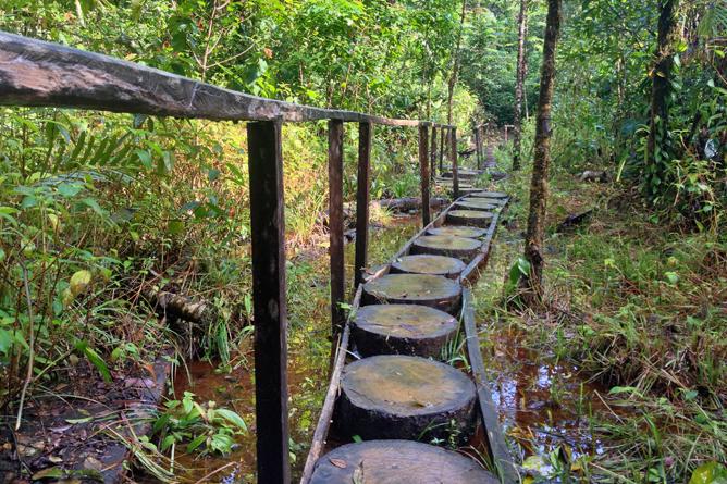 Costa Rica Familien-Rundreisen: Dschungelpfad in Boca Tapada