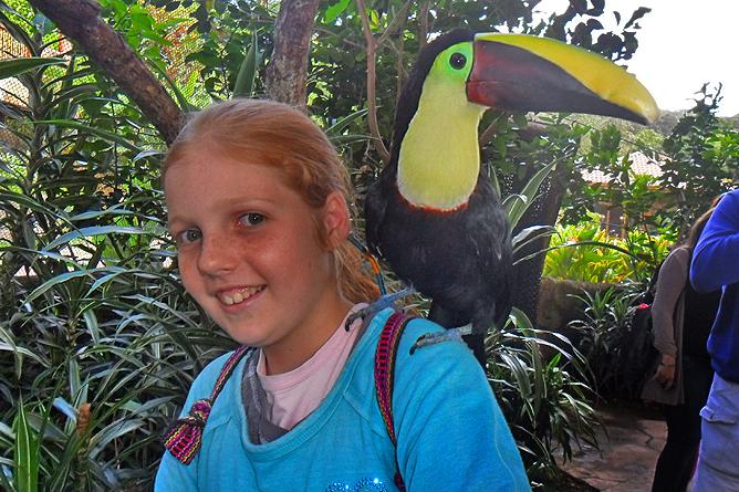 Costa Rica Familien-Rundreisen: Begegnung mit einem Tukan hautnah im Wasserfallgarten