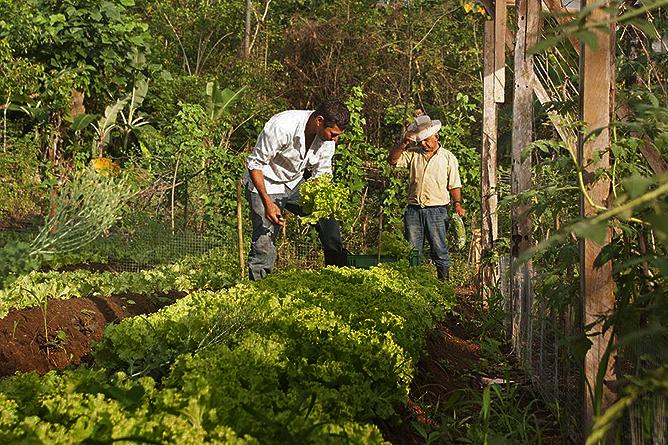 Finca Luna Nueva – Farm: Gemüsebeete