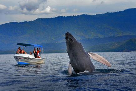La-Cacatúa-Lodge-Walbeobachtung-im-Meeresnationalpark