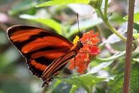 Villa San Ignacio - Schmetterling