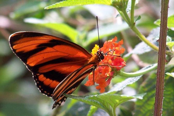 Villa San Ignacio – Schmetterling