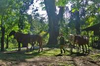 pferde-selva-bananito-lodge-costa-rica