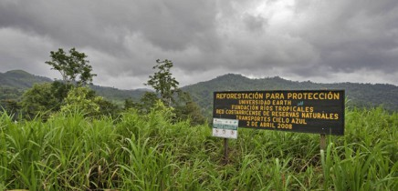 Rio-Tropicales_Lodge-am-Fluss_Wiederaufforstung