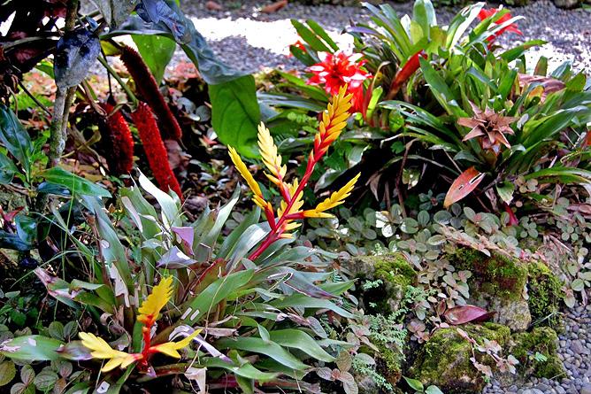 Casa Marcellino – tropischer Garten, Bromelien