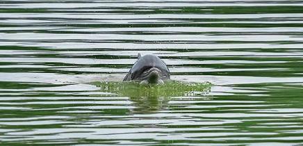 Lirio-Lodge_Delfin-besucht-Flusslandschaft_Foto-mit-Drohne