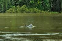 Lirio-Lodge_Delfin-besucht-Pacuare-Flusslandschaft_Drohne