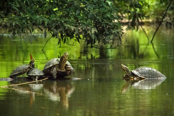 Lirio Lodge Flussschildkröten
