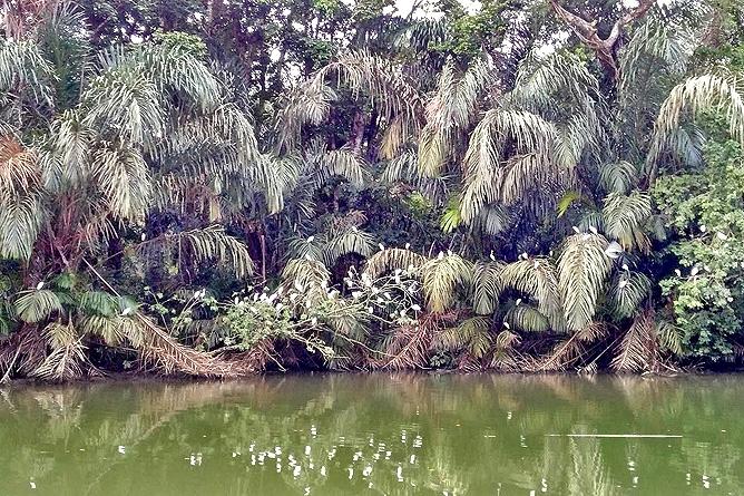 Lirio Lodge dicht bewachsene Flussufer Río Madre de Díos