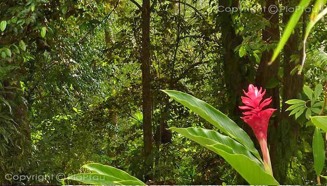 Star Mountain Lodge – Dschungel